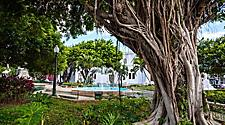 Large banyan tree in the park overlooking a fountain in Ponce, Puerto Rico