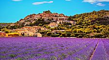 A lavender field in Provence, France
