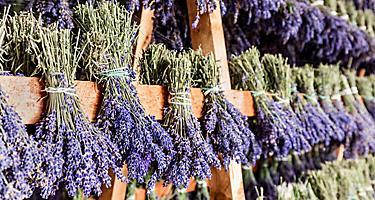 Dried lavender hanging in Provence, France
