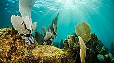 Corals and marine life of the Great Mayan Reef