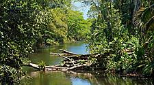 Small tropical river with fallen tree in a tropical forest near Purto Limon, Costa Rica