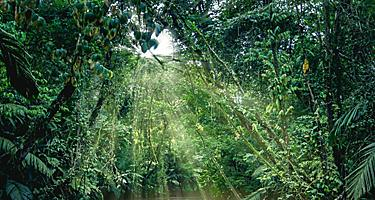 Plants of the rainforest, as seen from a boat in the canals of Tortuguero National Park in Puerto Limon, Costa Rica