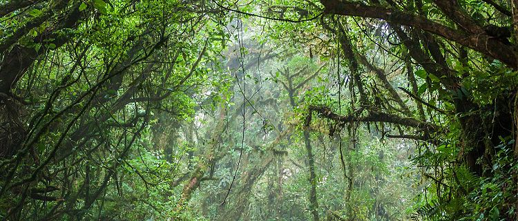 The rain forest within the Monteverde Cloud Forest in Costa Rica