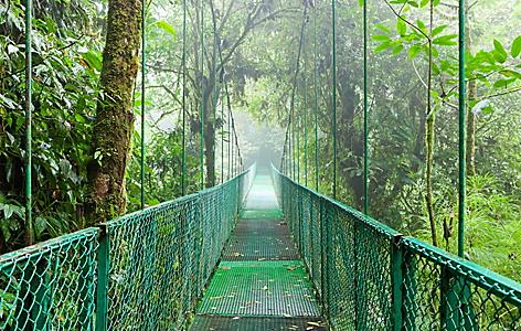 Suspension bridge in a rainforest in Puntarenas, Costa Rica