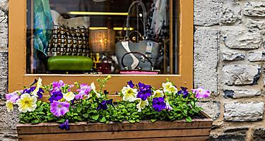 A storefront window with handbags