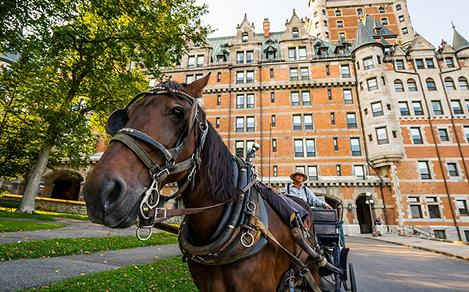 Horse Carriage In Front of Quebec's Historical Building
