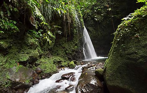 Exotic Hibiscus waterfall tucked away in rainforest greenery, Roseau, Dominica