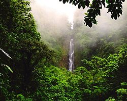 roseau dominica trafalgar falls jungle canopy