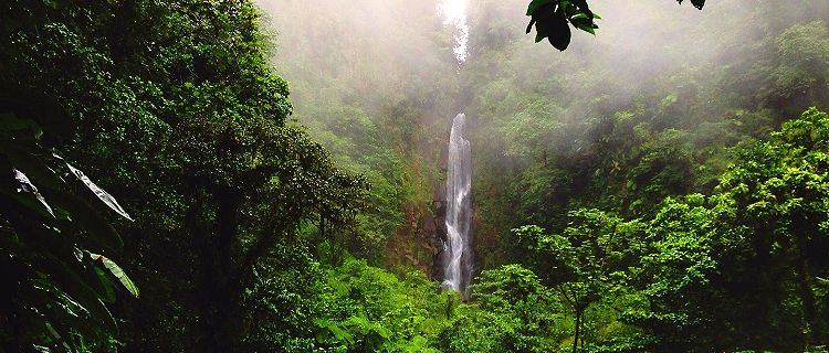 Lush rainforest with views of Trafalgar Falls, Roseau, Dominica