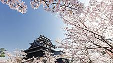 Matsue Castle during cherry blossom season in Sakaiminato, Japan