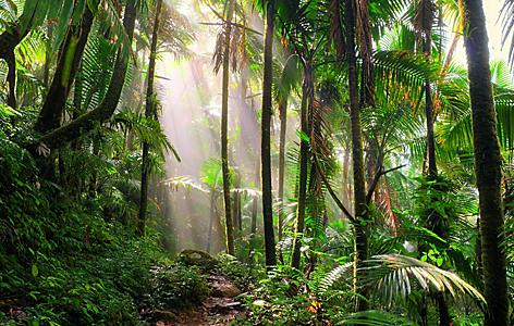 Early morning sunlight on the lush vegetation of El Yunque National Rain Forest in San Juan, Puerto Rico