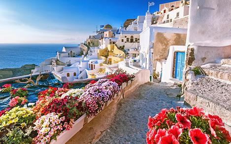 Scenic view of traditional cycladic houses on small street with flowers in foreground, in Santorini, Greece