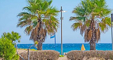 Palm trees by a coastal beach in Sardinia