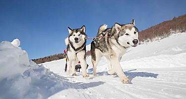 Seaward Alaska famed dog-sledding race adventure.