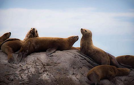 Seward Alaska's marine life is full of sea lions