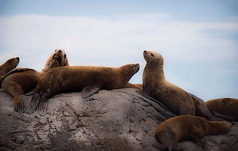 Sealife Center Sea Lions Marine Life, Seward, Alaska