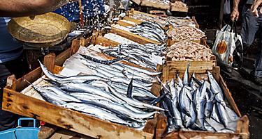 A fish market in Catania, Sicily, Italy