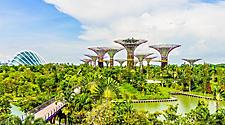 Day view of the Supertree Grove of the Gardens by the Bay in Singapore