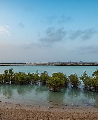 The Sun rising over iconic mangroves on Sir Bani Yas, United Arab Emirates