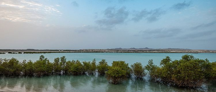The Sun rising over iconic mangroves on Sir Bani Yas, United Arab Emirates
