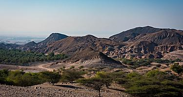 Landscape of trees and mountains in Sir Bani Yas, United Arab Emirates