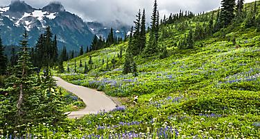 sitka alaska nature park mountains