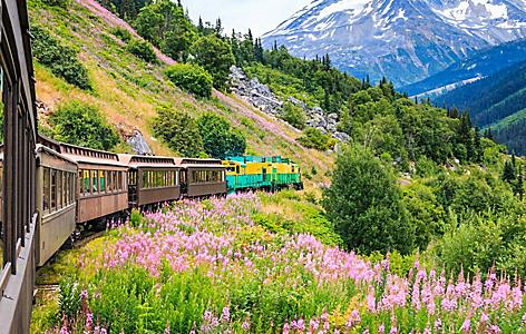 Blown away Skagway Alaska scenery with a vintage car rail along with snow mountains and beautiful purple flowers.