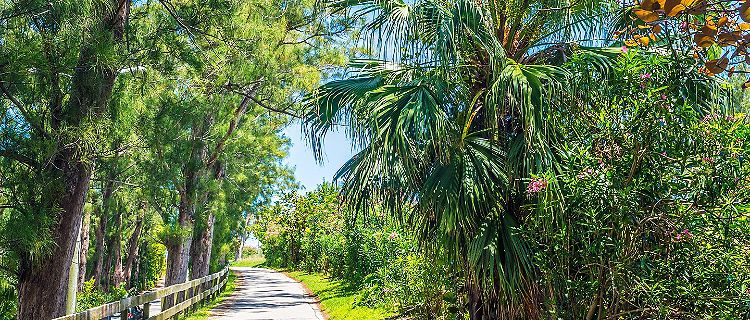 Tropical walkway with flowers, palm trees, and pines, on St. George's, Bermuda