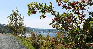 View of St. John's harbor through some trees from Signal Hill