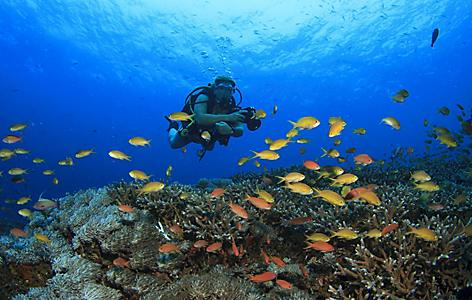 Scuba Diving on coral reef with tropical fish in Subic Bay, Philippines