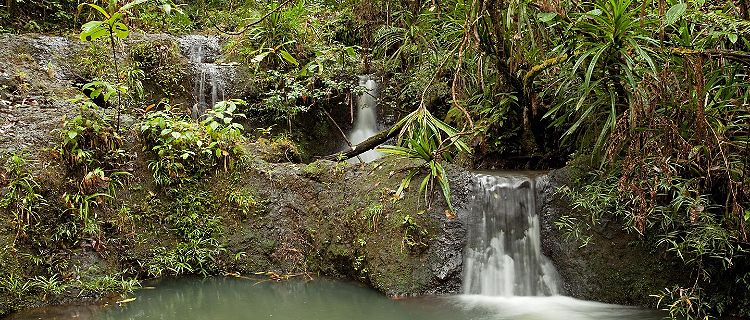 A small waterfall in a forest in Suva, Fiji