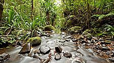 A stream though a forest in Suva, Fiji