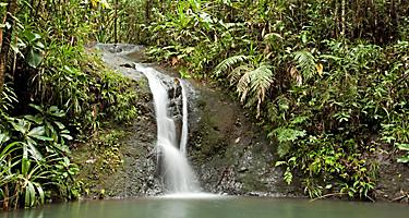 A waterfall in a forest in Suva, Fiji