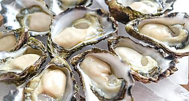 A plate of fresh Sydney rock oysters