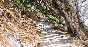 A walking path up Mount Maunganui