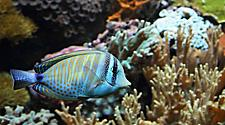 Fish swims through the coral underwater in Tortola, British Virgin Island