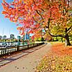vancouver british columbia stanley park urban greenspace fall