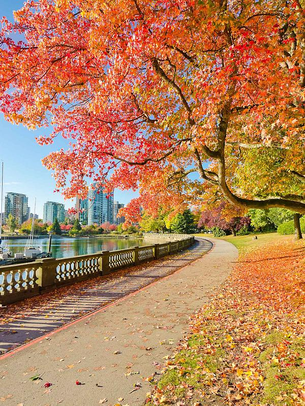 Fall Foliage Vancouver British Columbia, Stanley Park