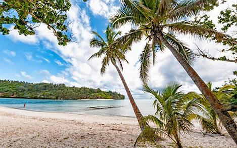 Palm trees on a beach in Vava'u, Tonga