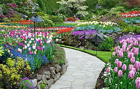 victoria british columbia garden city flowers butchart gardens
