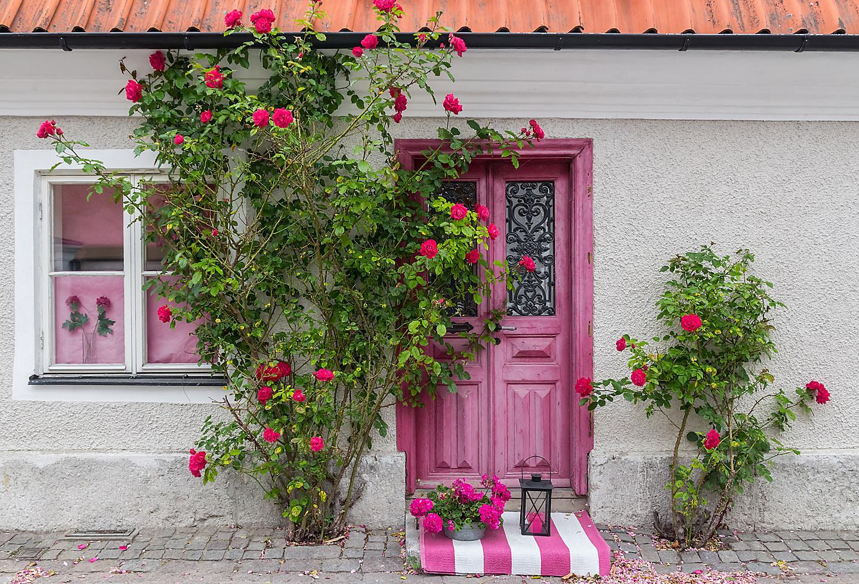 Sweden Visby Old Town Rose Bush