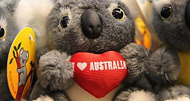 Koala stuffed toy at a souvenir shop in Australia