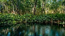 The mangroves perfect for kayaking in Yucatan, Mexico