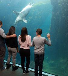 Alaska Seward Aquarium Cruise Tours
