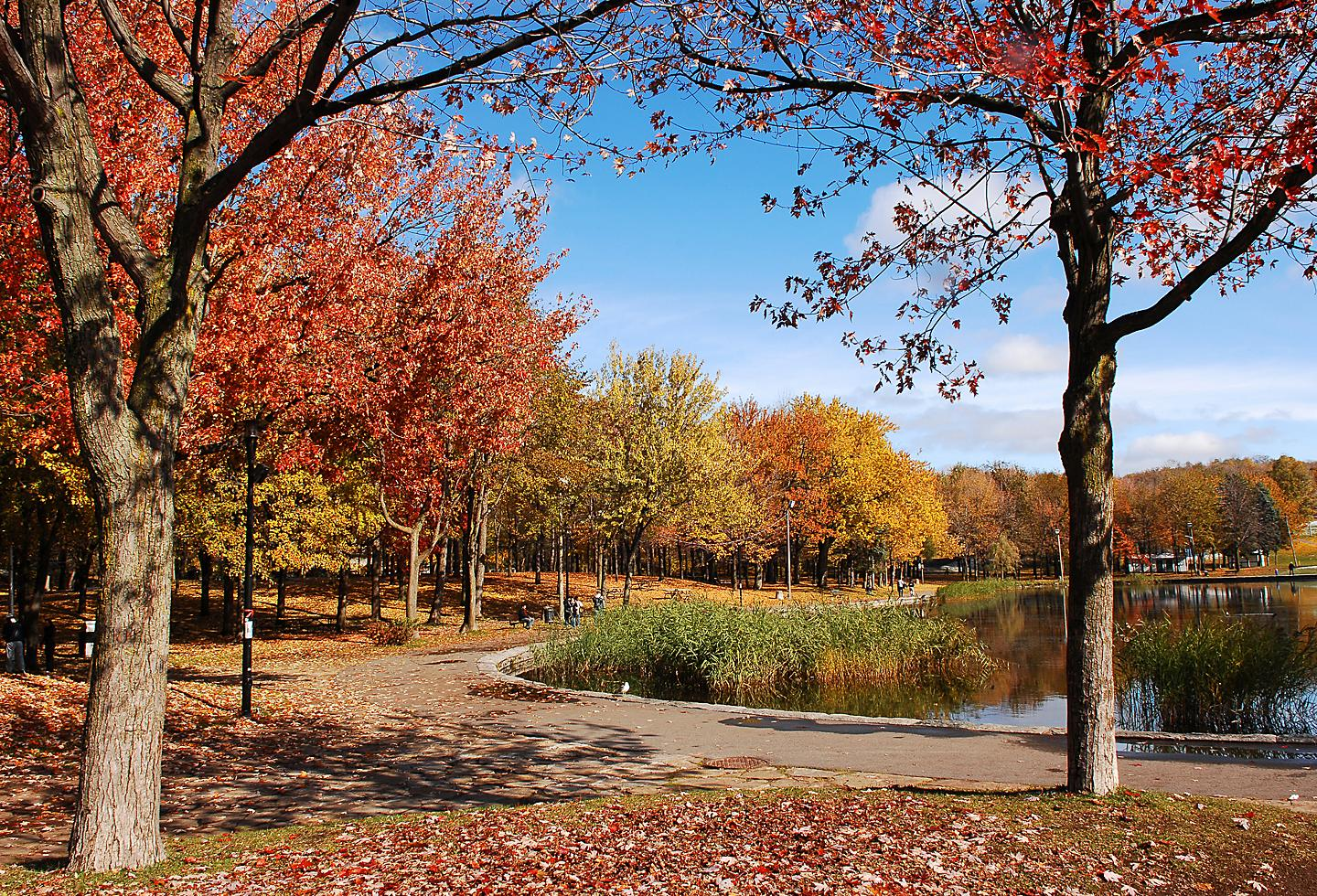 Canada Montreal Frederick Law Olmsted Fall