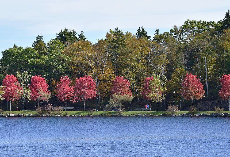Saint John Canada Rockwood Park Maple Trees Fall