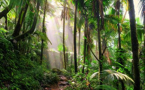 Beautiful Hiking Path in El Yunque National Park