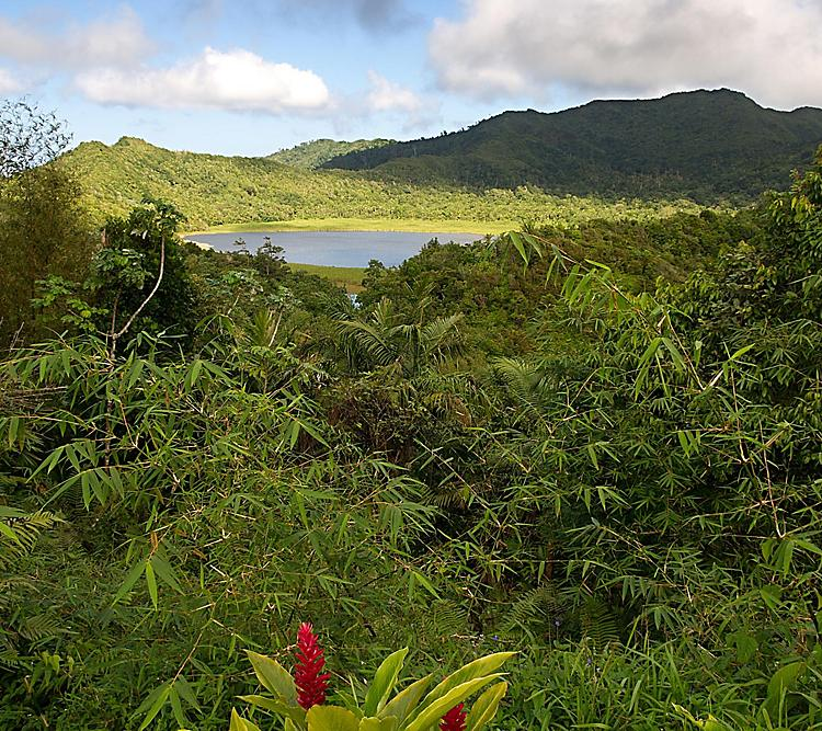 Nature, Trees and Rainforest, with Etang Lake in the Background, Grenada.