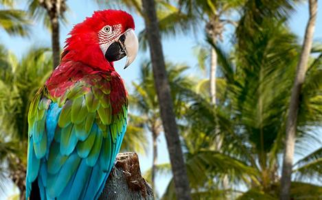 Colorful Parrot in Punta Cana, Dominican Republic
