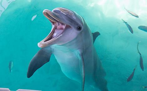 Dolphin Smiling for the Camera